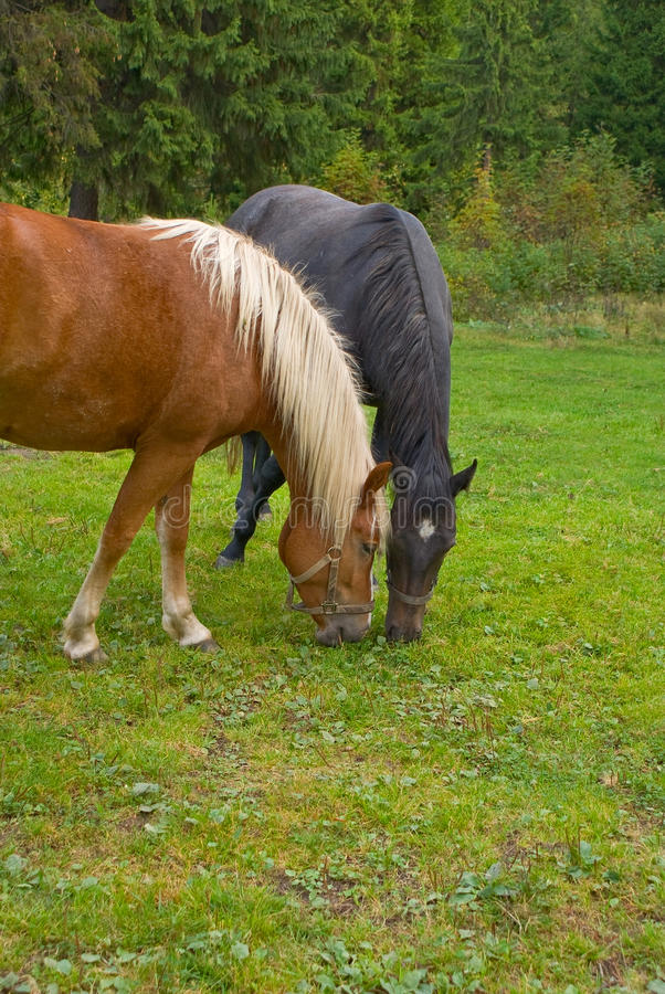Download Horses stock image. Image of riding, pasture, rural, field - 11664615