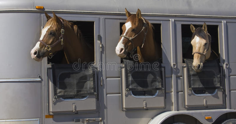 Download Horses stock photo. Image of horse, curiosity, farm, mammal - 14650320