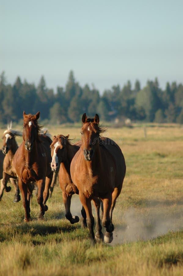 Download Horses stock photo. Image of horse, running, herd, horses - 1715944