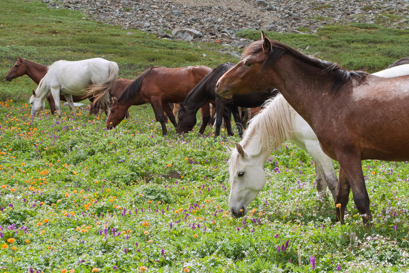 Download Horses stock photo. Image of summer, hill, meadow, agriculture - 18164506