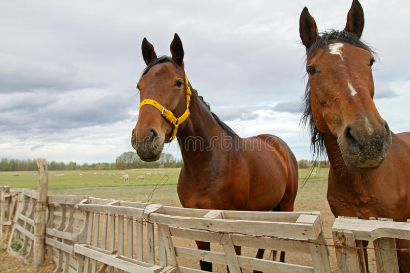 Horses. In farm (Patagonia, Argentina royalty free stock photography