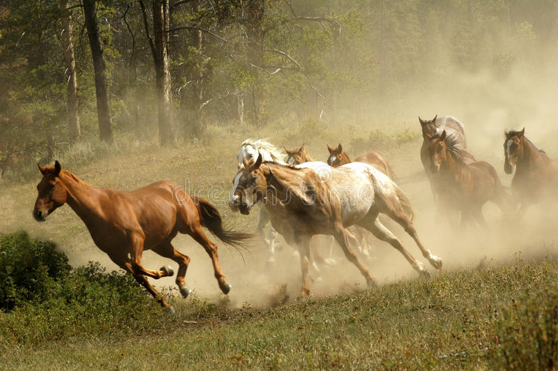 Download Horses stock photo. Image of stallions, broncos, western - 18752292