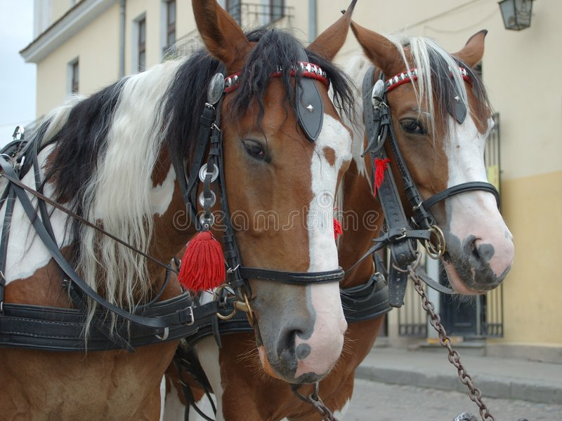 Download Horses stock photo. Image of heads, forelock, riding, coach - 19702