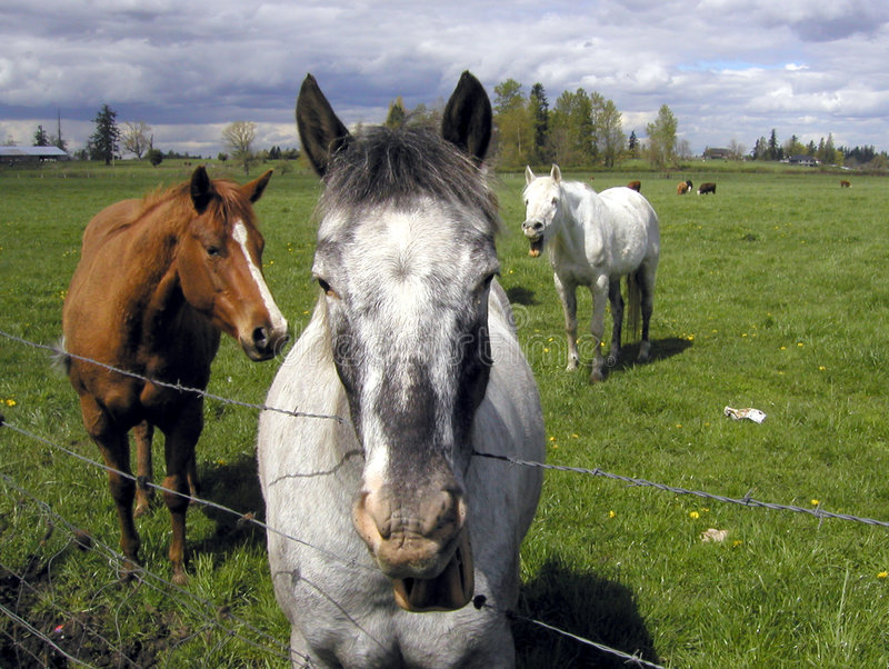 Download Horses 2 stock image. Image of pasture, fence, horse, grass - 105587