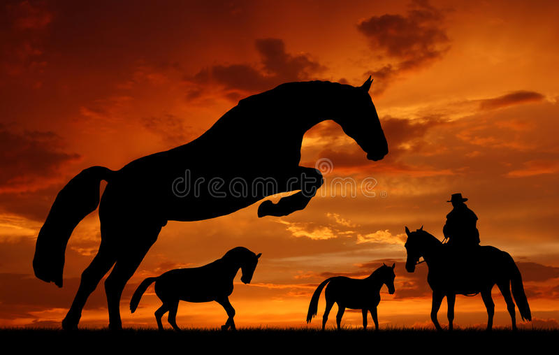 Download Horses Stock Photos - Image: 20352193