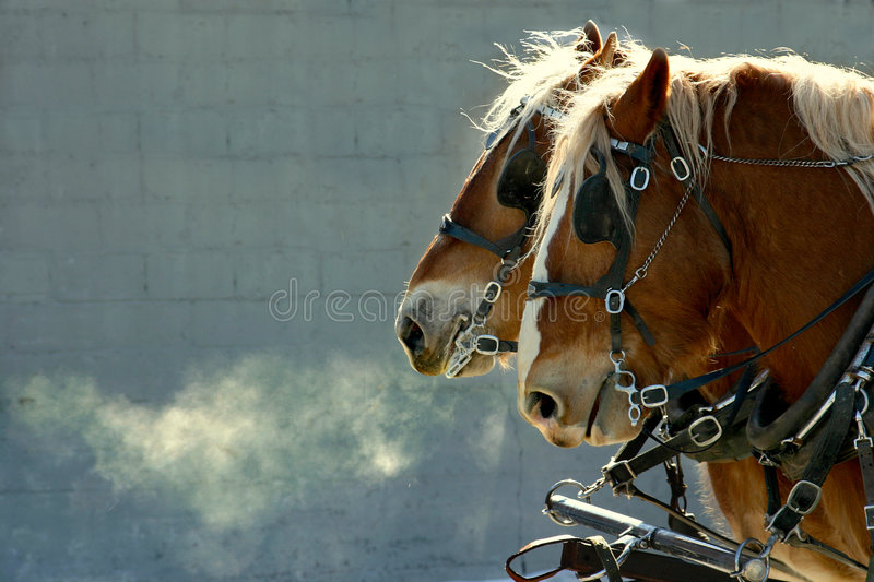 Download Horses stock image. Image of team, farm, pull, cart, mist - 2095297