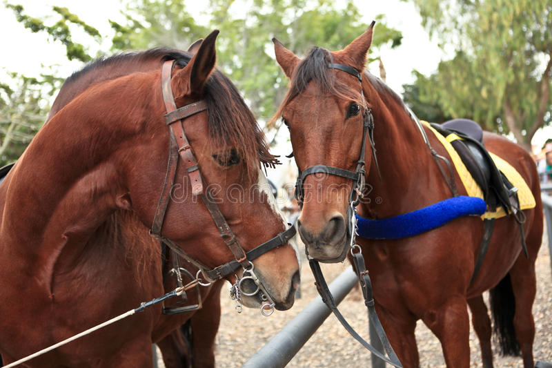 Download Horses stock image. Image of activity, exhibition, dust - 24639057