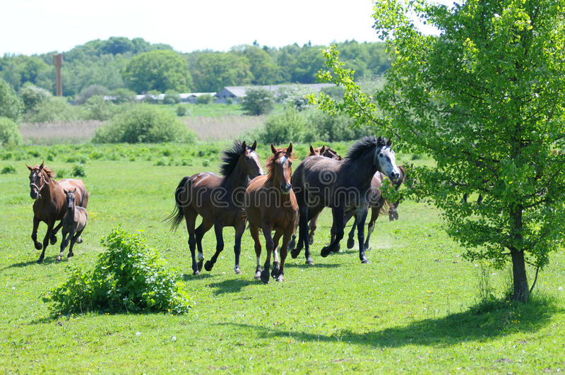 Download Horses stock image. Image of horse, field, courser, brown - 25486293