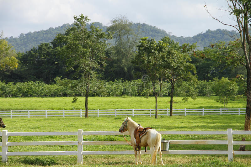 Download Horses stock image. Image of nature, mane, pasture, feed - 25968673