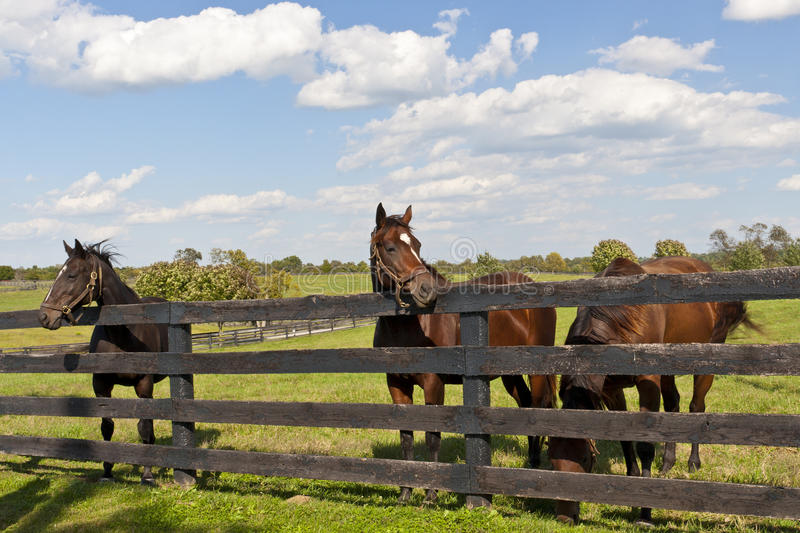 Horses Royalty Free Stock Images