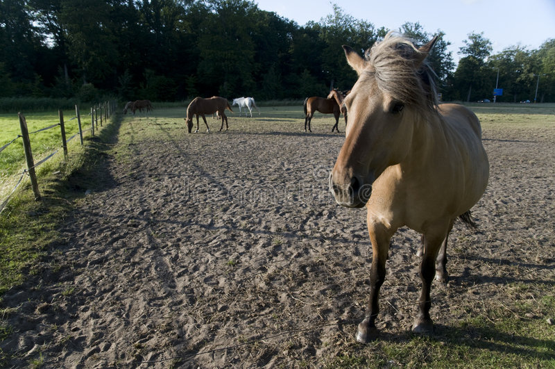 Download Horses stock photo. Image of many, sand, outdoor, mammals - 5676992