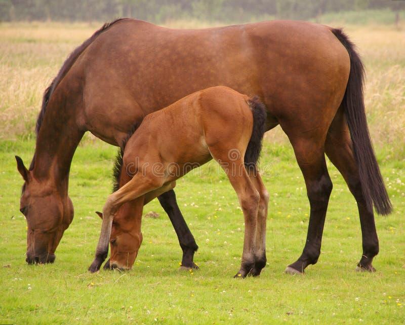Download Horses stock image. Image of grass, cute, farm, mammal - 5844305