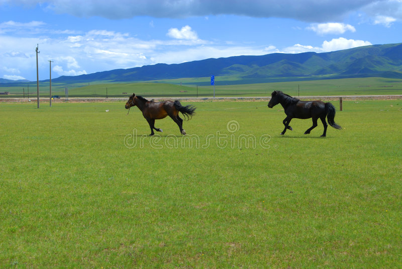 Download The horses stock photo. Image of white, horse, horses - 6973476