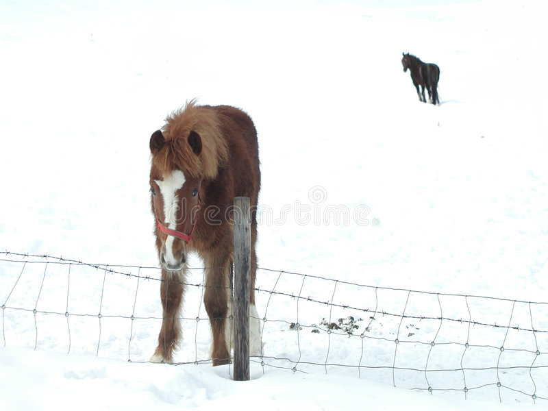 Download Horses stock image. Image of wire, horses, boarder, snow - 73449