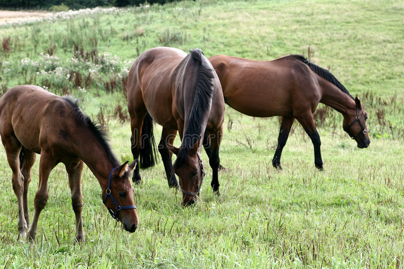 Download Horses Stock Photos - Image: 812343
