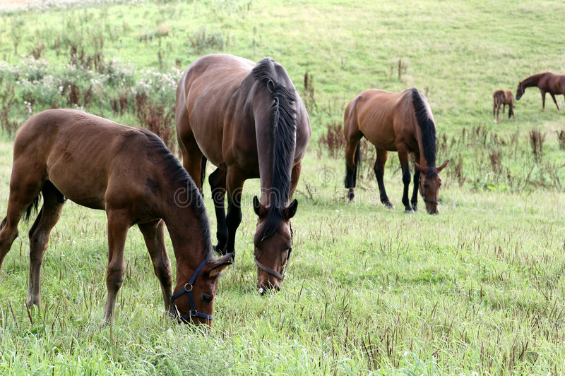 Download Horses stock photo. Image of danish, equine, head, horse - 812354