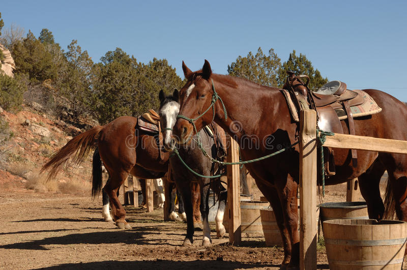 Download Horses stock photo. Image of corale, western, saddle, outside - 9420874