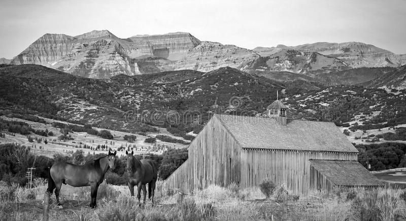 Horses and a barn sunrise in rural Utah, USA. royalty free stock photo