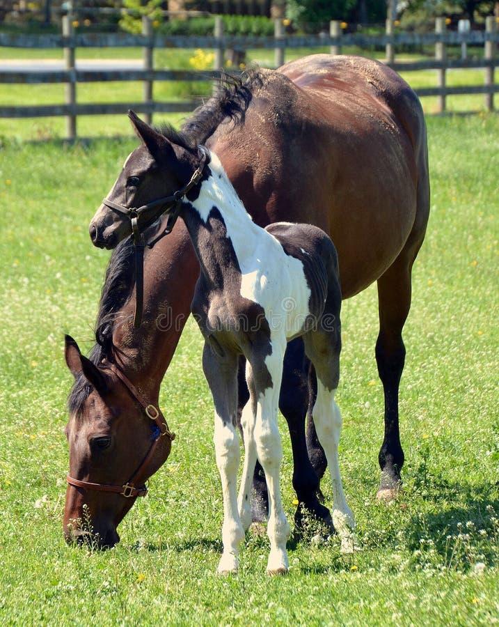 Horses 208 Stock Photo