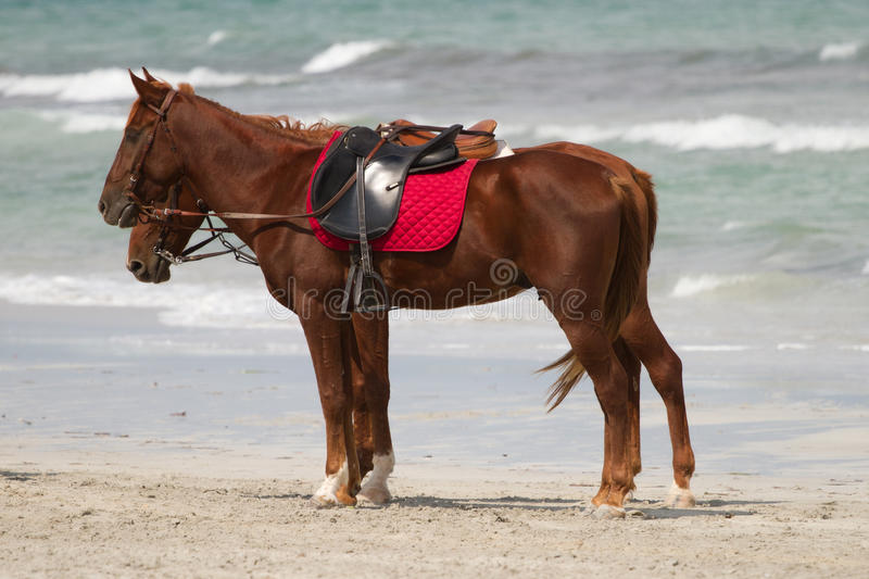 Download Horses On A Beach Stock Image - Image: 21510261