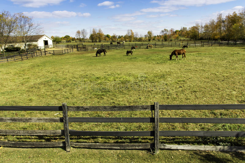 Horses behind a farm fence royalty free stock image