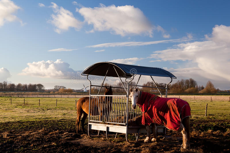 Horses in blanket feeding stock photos