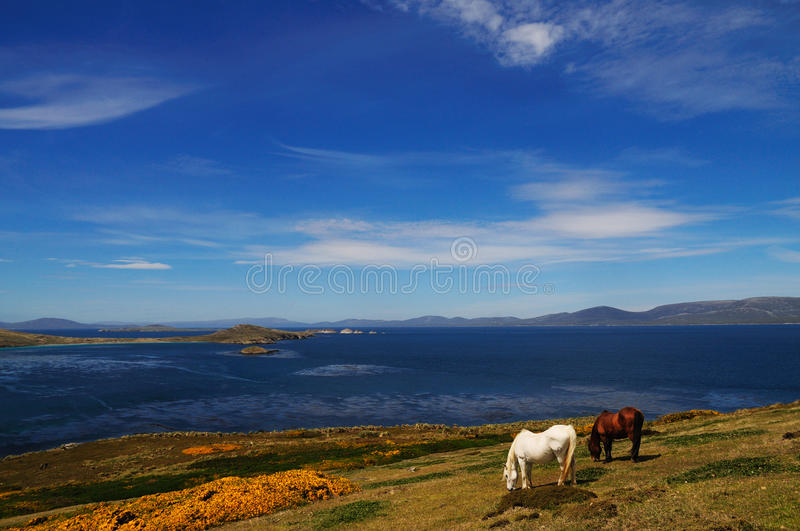 Horses and Blue Skies stock photography