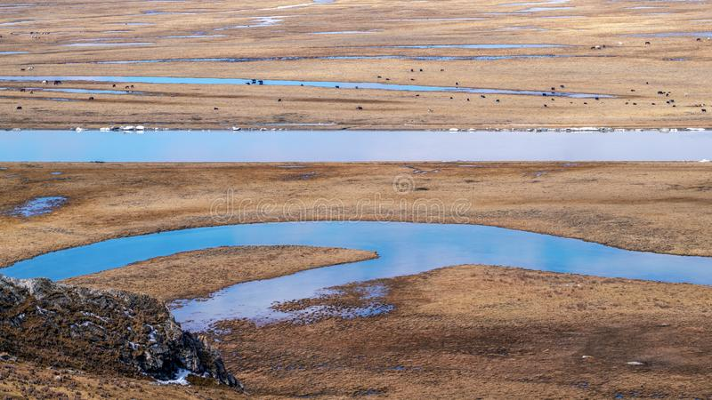 Horses and Blue sky white clouds Frozen river Yellow grass in Bayanbulak in Spring stock images
