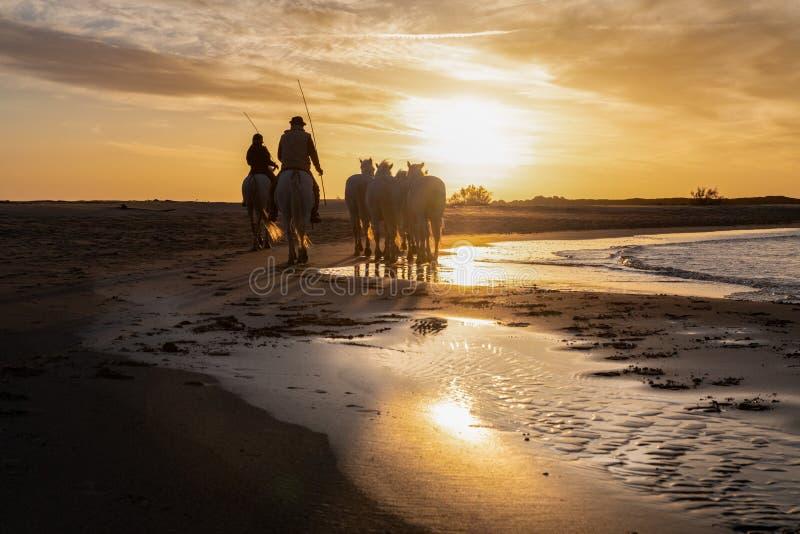 Horses in Camargue stock photo