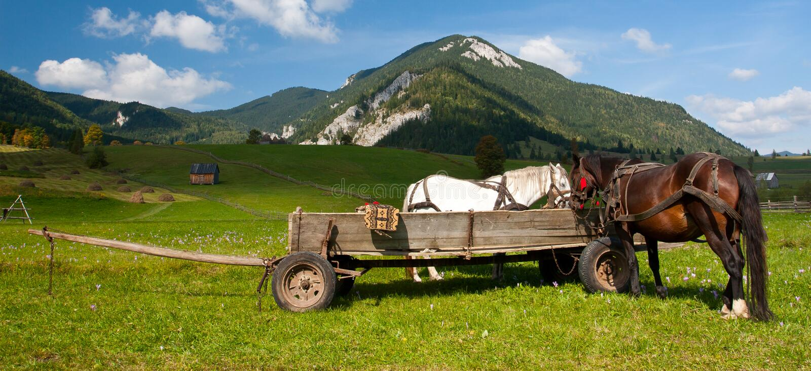 Download Horses and Carriage stock image. Image of carriage, forest - 17095705