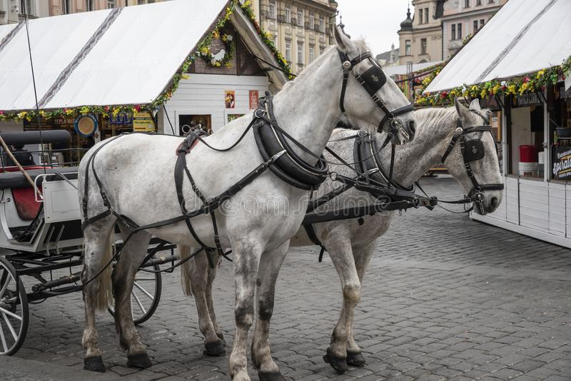 "Horses carriage in Prague. Prague, capital city of the Czech Republic, is bisected by the Vltava River. Nicknamed ""the City of a Hundred Spires,"" royalty free stock images"