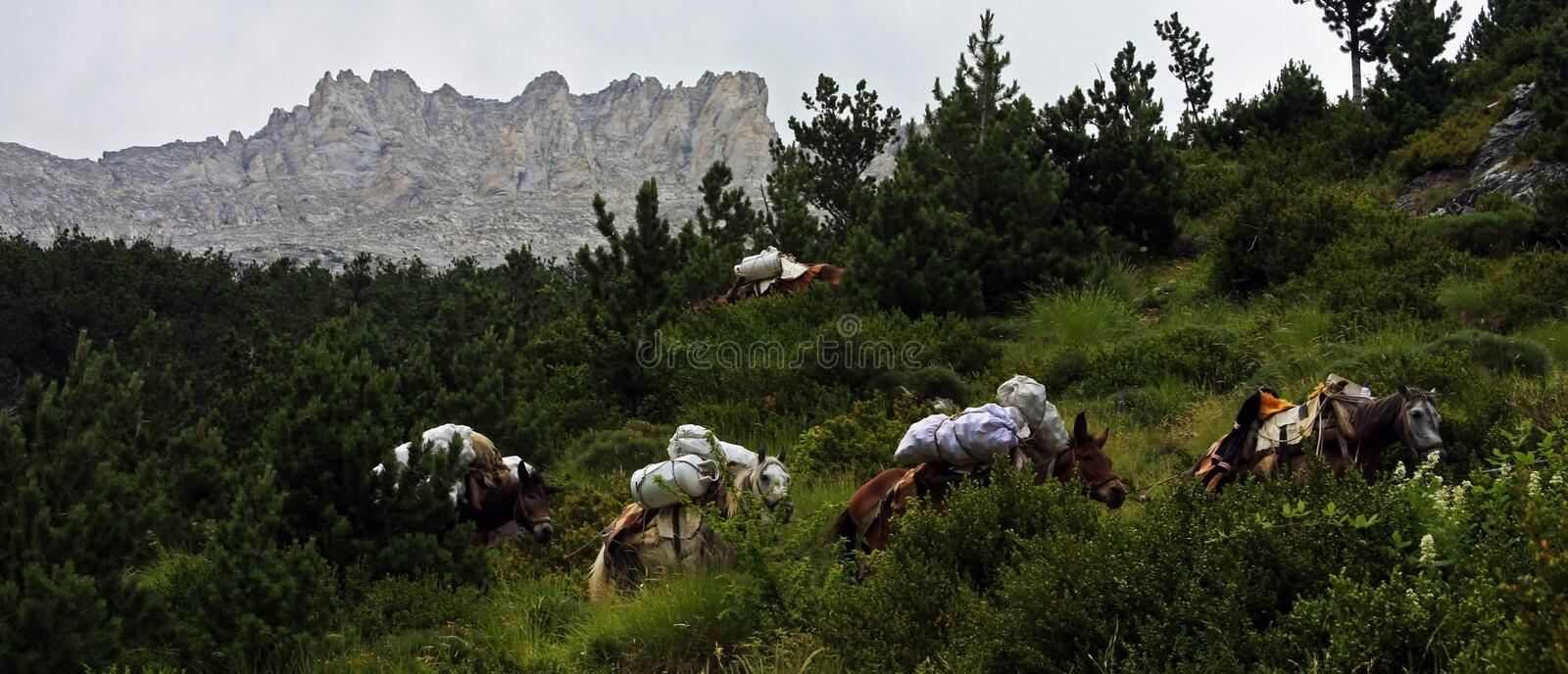 Horses carrying garbage off the Mount Olympus. Horses are used to carry down garbage from mount Olympus stock photography