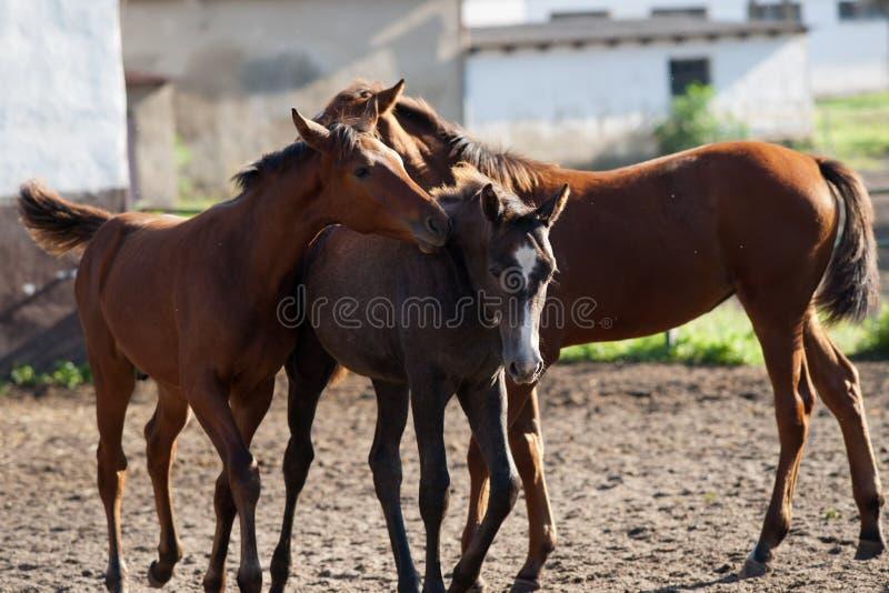 Horses on the catwalk royalty free stock image