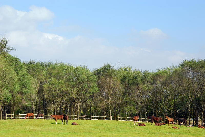 Horses in coral stock photo