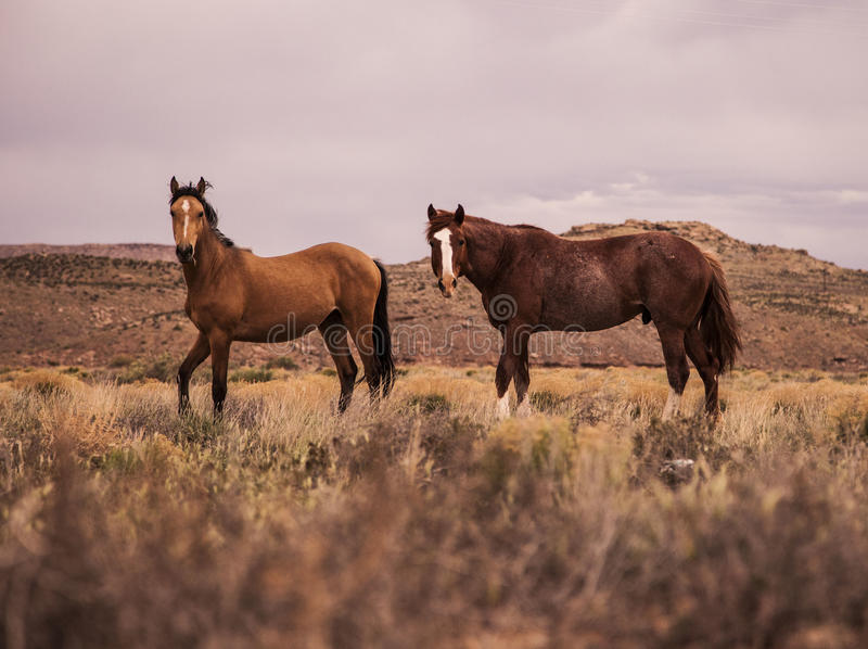 Horses In Country Field Free Public Domain Cc0 Image