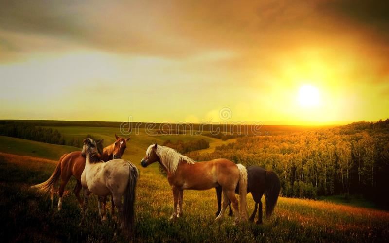 Horses in country field at sunset stock photos