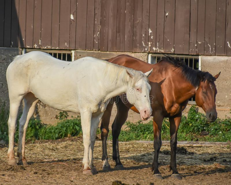Horses at Dan Patch Stables stock photo