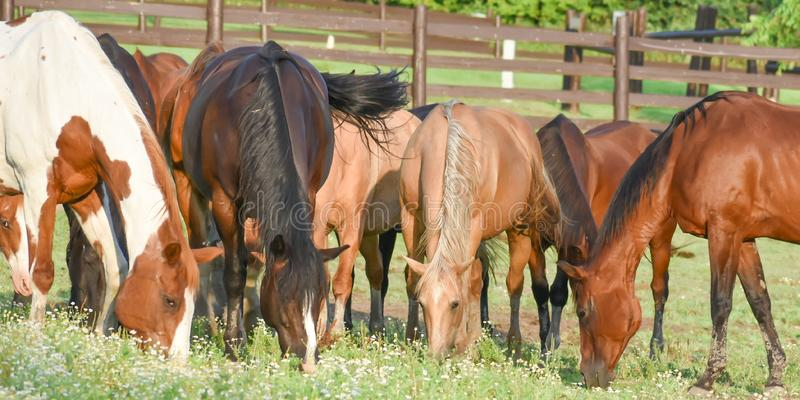 Horses at Dan Patch Stables stock photos