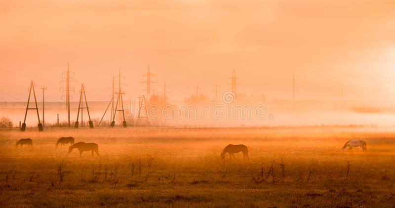 Horses at dawn in the field. Fog. Industrial. Many horses on early morning, field. Industrial background, fog royalty free stock images