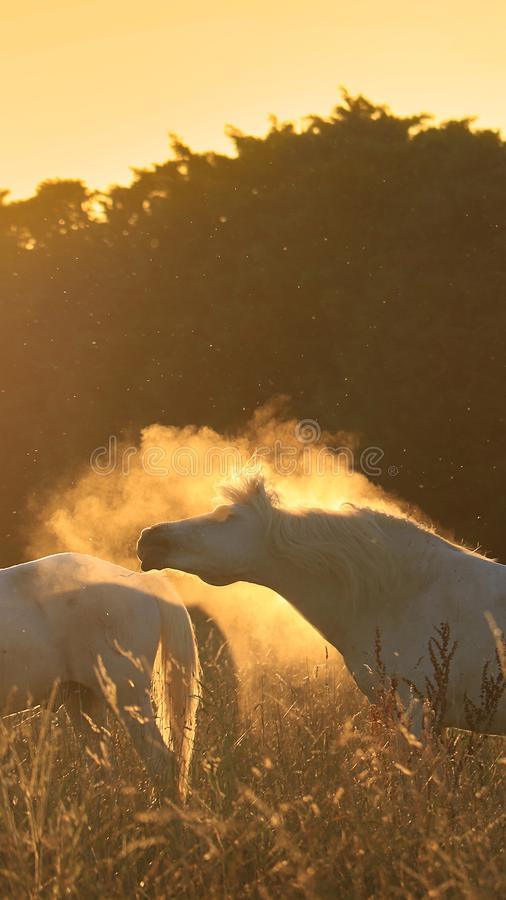 Free Horses, Dust, And Light Royalty Free Stock Photos - 103229488