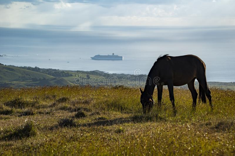 Horses in Easter Island royalty free stock images