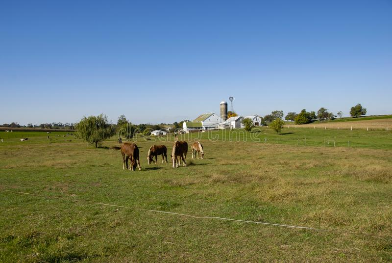 Horses Eating in the Fields of Amish Farms. On a Sunny Day stock image