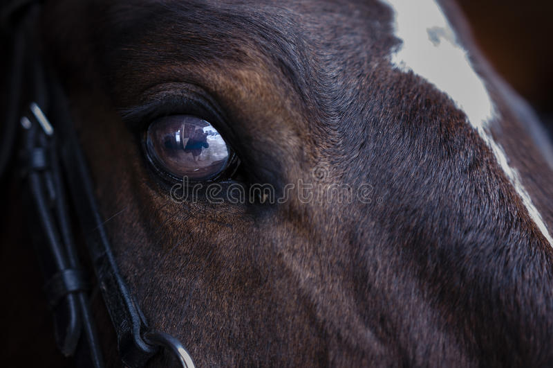 Horses eye stock image
