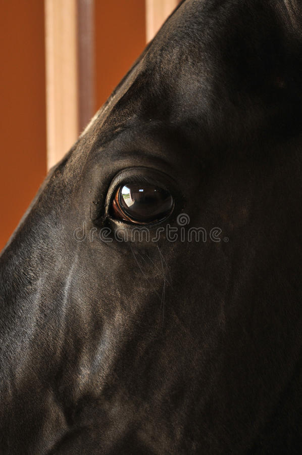 Download Horses eyes close up stock image. Image of family, hair - 11255367