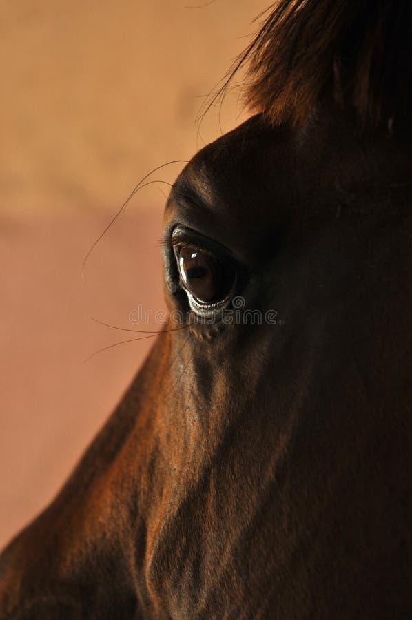 Horses eyes close up stock photography