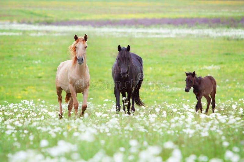 Horses family royalty free stock photos