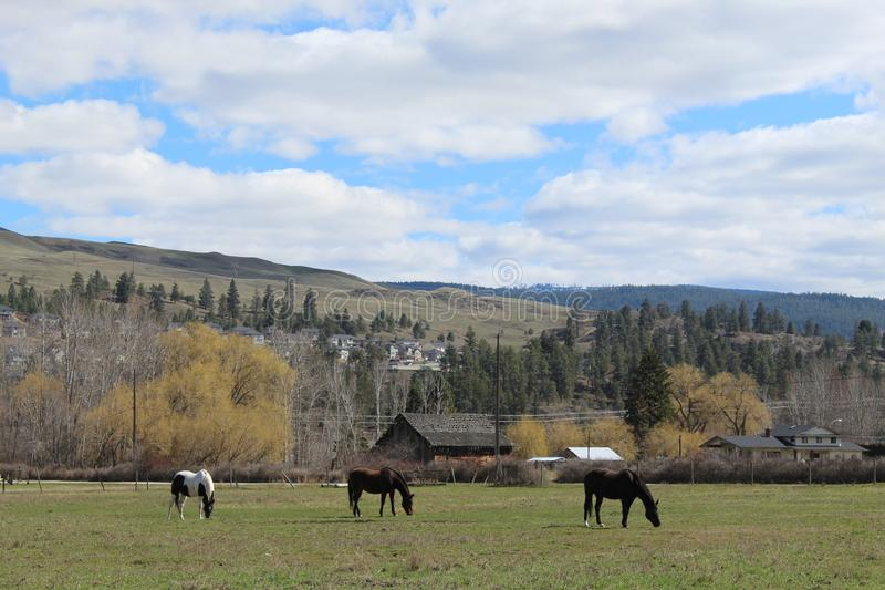 Horses in farm field with mountains and sky background royalty free stock photography
