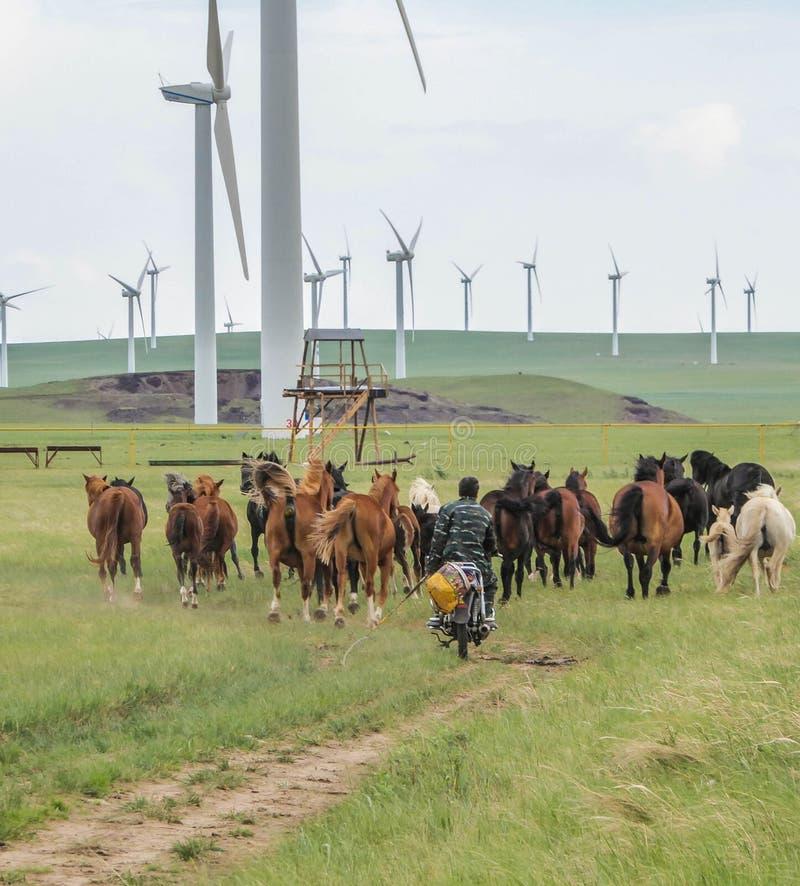 China - Motor Horses royalty free stock photo