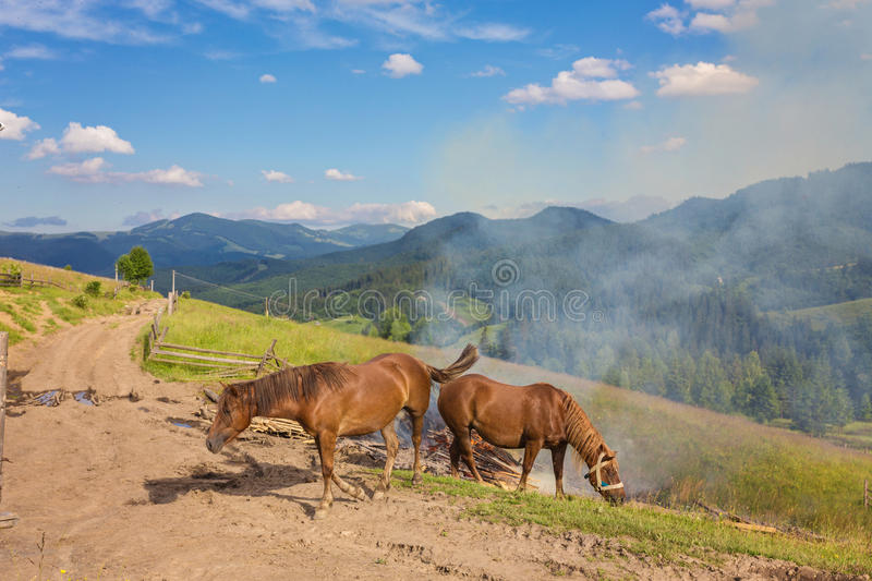 Horses, feeding on grass at high-land Carpathian pasture royalty free stock photography