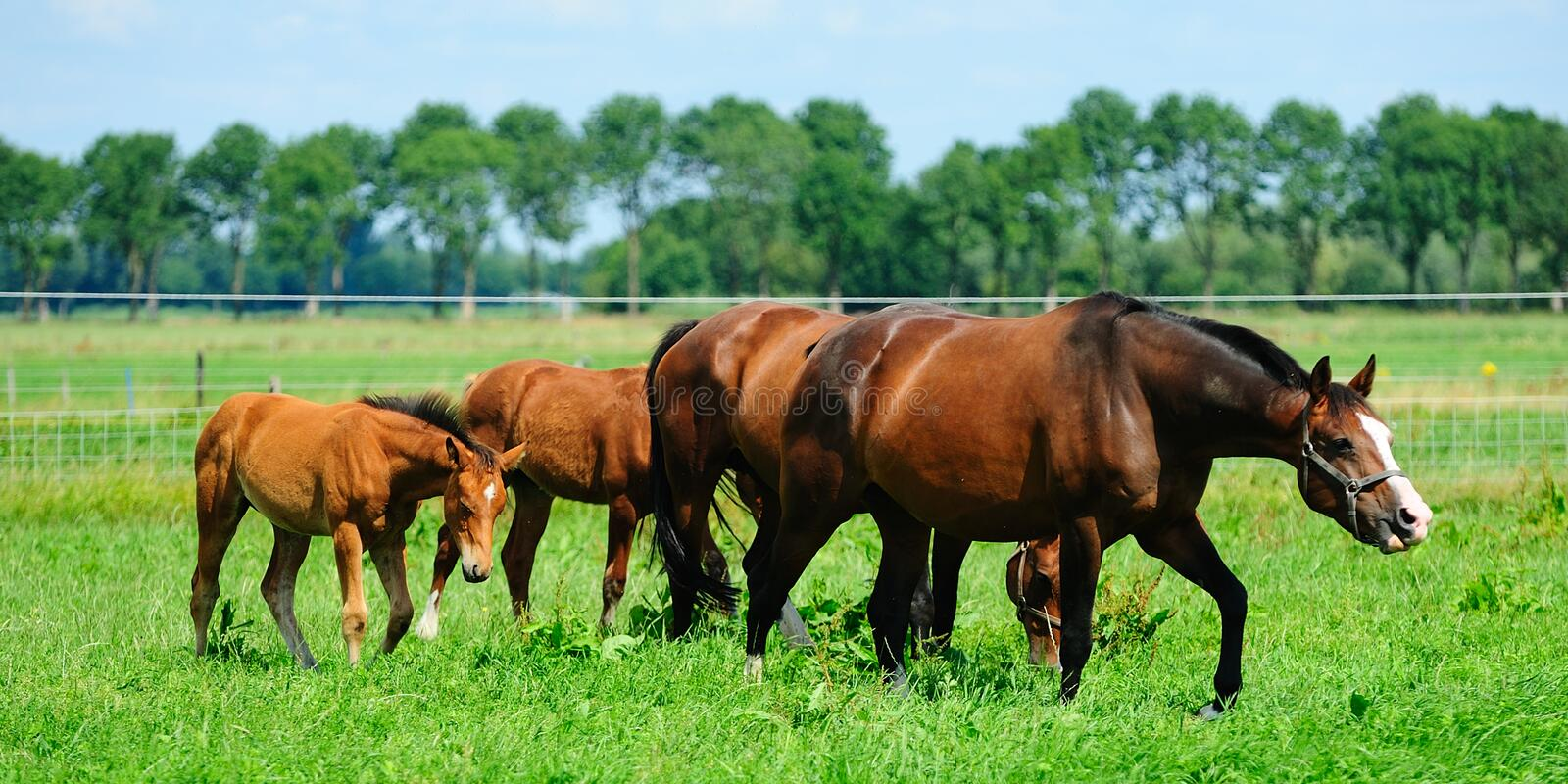 Horses on a field. Horses on a green field royalty free stock photography